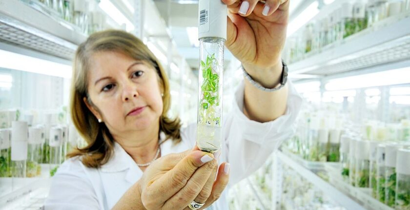 In-Depth Analysis of the Plant Scientists' Role in Vertical Farming