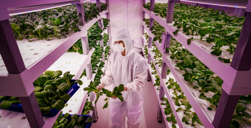 Why Jobs in Vertical Farming will play a role in the future food production
