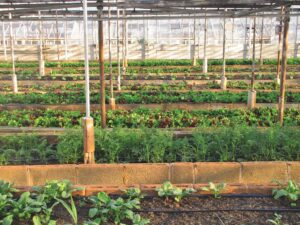The Role of Engineering in Vertical Farming and How a New Generation of Engineers is Changing the Food Industry