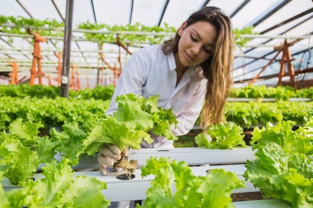 Why you should apply for Vertical Farming jobs?