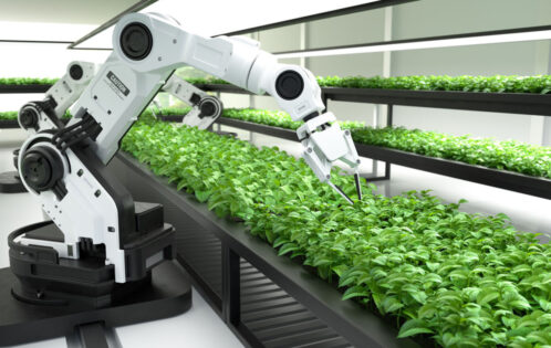 The Role of Automation in Vertical Farming