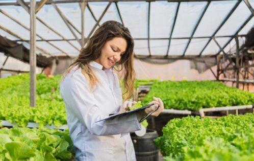 The Role of Hydroponic Engineer's in Vertical Farming